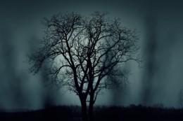 dark-nature-night-1404-525x350