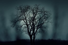 dark-nature-night-1404-525x350