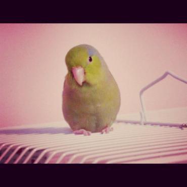 J'avais appelé mon oiseau Helcules Poirot en hommage au personnage qui m'avait tant marqué.