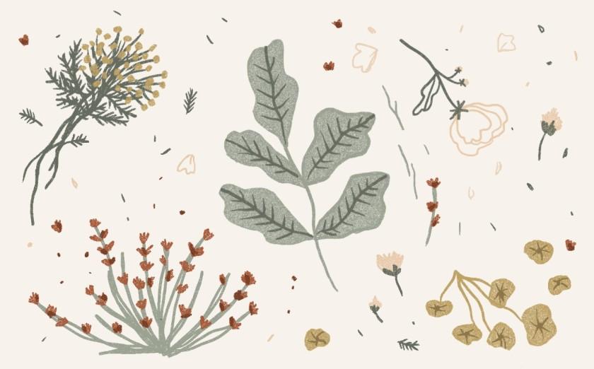 lefilrouge, lefilrougelit, fleurs, nature, suggestions littéraire, Botanicum, The invention of nature, Alexander Von Humboldt's, Andrea Wulf, Katie Scott, Kathy Willis