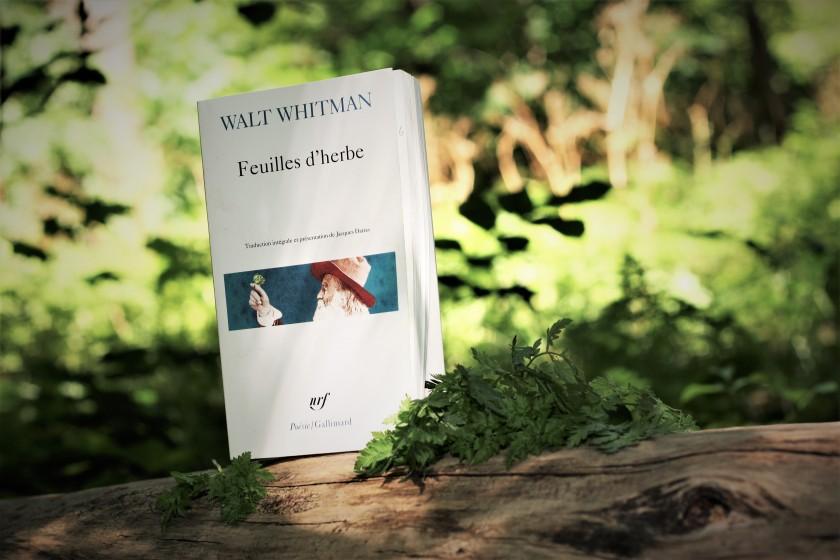 Walt Whitman, Lefilrouge, Le fil rouge lit, Poésie, littérature, littérature étrangère, poète américain, Feuilles d'herbe